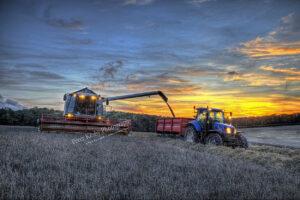 BR024 harvest sunset web