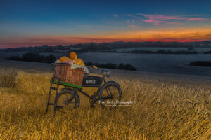 BR026 hovis in field sunset web