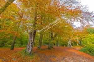 BE006 autumn at pilgrims nook landscape web