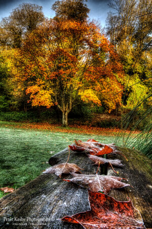 Bushy Ruff - Frosty Autumn