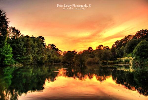 Bushy Ruff - Sunset #1