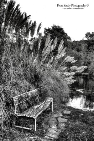 Bushy Ruff - Bench - Mono