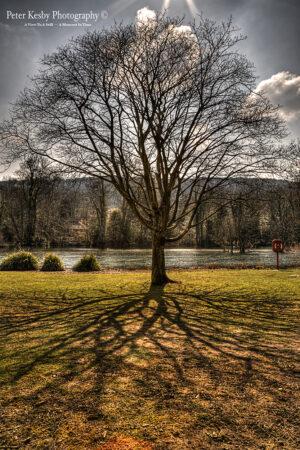 Bushy Ruff - Tree - Shadow