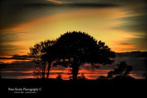 Ripple - Sunset - Tree