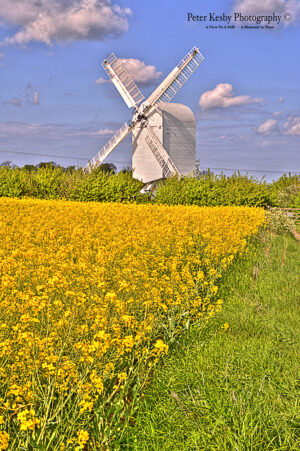 Chillenden Windmill - Rapeseed