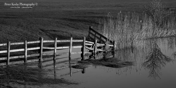 Fence - Reflection