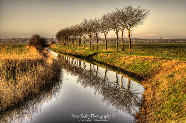 Tree Reflection - Romney Marsh