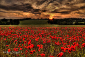 Poppy Field - Tilmanstone - Sunset
