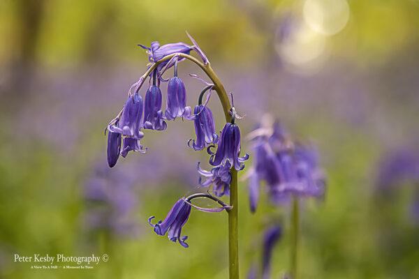 Romantic Bluebell Truss