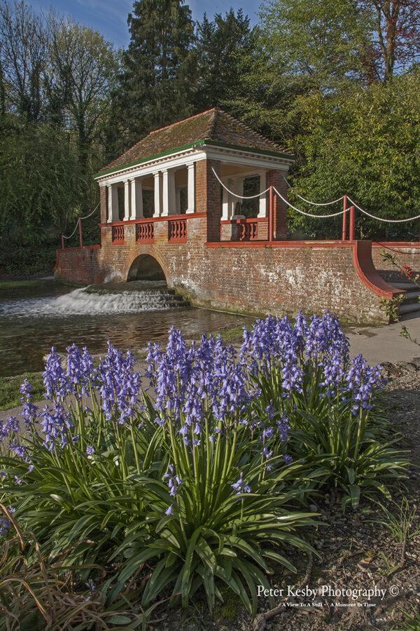Russell Gardens - Bluebells
