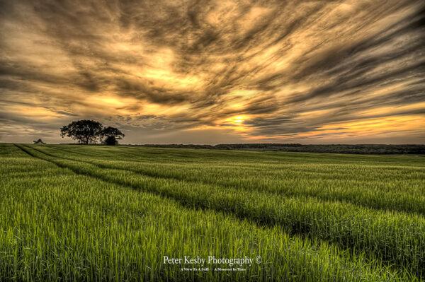 Field - Aylesham - #1