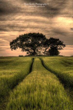 Field - Aylesham - #2