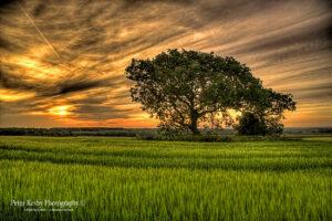 Field - Aylesham - #3