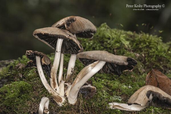 Fungi - #3