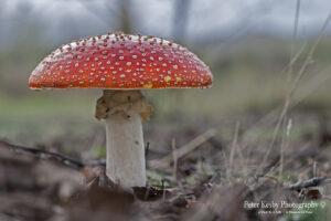Fungi - #9