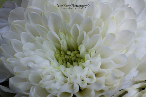 Flower Head - Macro