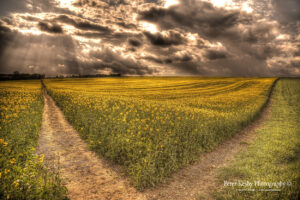 Which Path? - Rapeseed