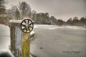 AC004 Snow Frozen Bushy Ruff