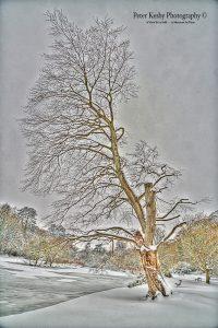 AC020 Bushy Ruff Tall Tree Snow