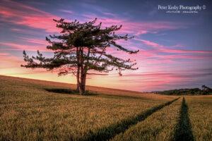 AK017 purple sky kingsdown tree in field