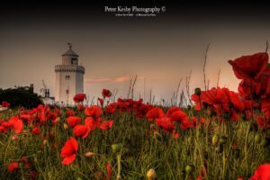 BA011 poppies at south foreland