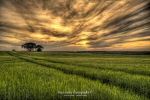 BD012 aylesham field -1