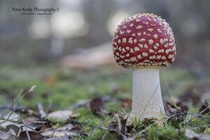 BG011 fungi-11