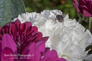 BO014 fly on flower